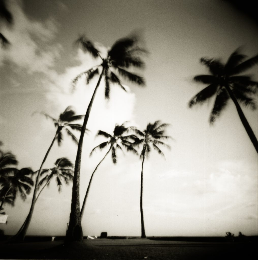 Poipu Beach Palms (Pinhole Camera)